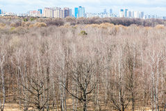 Above view of bare trees and city in sping day Royalty Free Stock Images