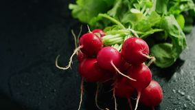 Bunch of ripe radish. From above view of bunch of red ripe radish with green top on black background stock video
