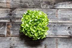 Above view of fresh green salad for healthy organic diet Royalty Free Stock Images