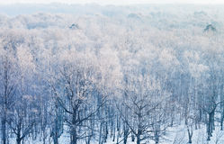 Above view on frozen woods in cold winter Stock Images