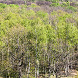 Above view of green woods trees in spring Royalty Free Stock Images