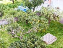 Above view of lemon tree in backyard, Sicily Stock Photo