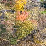 Above view of multicolored trees in urban garden Stock Photos