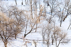 Above view of snow-covered urban garden Royalty Free Stock Photos