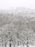 Above view of snow forest and urban houses Royalty Free Stock Images