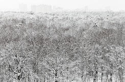 Above view of snowbound forest and urban buildings Stock Image