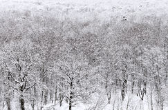 Above view of snowbound forest in winter Royalty Free Stock Image