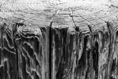 Above view of tree rings and side view of weathered wood pier, a background vintage grunge texture of faded paint, a detailed roug. H surface in black and white royalty free stock photos