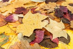 above view of various autumn fallen leaves Stock Photo