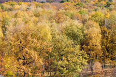 Above view of yellow trees in fores in autumn day. Above view of yellow oak and birch trees in fores in autumn day Stock Photo