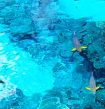 Above Water Colorful Parrot Fish Stock Photo