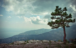 Above Yalta. Alone pine on the rocky slope above Yalta and sea Stock Photos