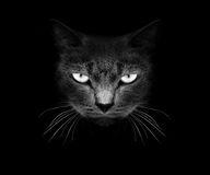 Abozale un gato Imagenes de archivo