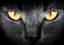 Abozale un gato Foto de archivo libre de regalías