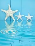 Abrégé sur étoiles de mer Photographie stock