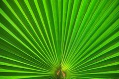 Abrégé sur en feuille de palmier vert de plan rapproché Image libre de droits