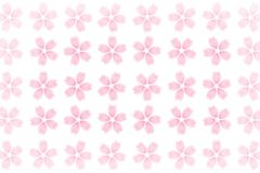 Abrégé sur japonais modèle de fleurs de cerisier sur le fond blanc Image stock