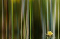 Abrégé sur Lilly de l'eau Images libres de droits