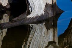 Abrégé sur nature - bois de flottage se reflétant dans l'eau images stock