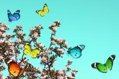 Abrégé sur nature de printemps photographie stock libre de droits