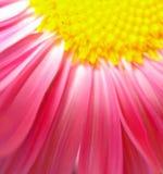 Abrégé sur pétales de fleur Images libres de droits