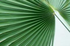 Abrégé sur palmier de fan Photographie stock