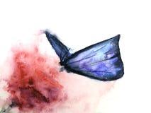 abrégé sur papillon d'isolement sur le fond blanc Tiré par la main illustration de vecteur