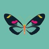 Abrégé sur papillon sur le fond de couleur verte Photographie stock libre de droits