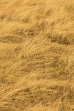 Abrégé sur profondément texturisé nature de roseau des sables du Connecticut Photos stock