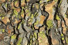 Abrégé sur schiste et lichen Photos stock