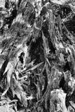 Abrégé sur tronc d'arbre de décomposition photos stock