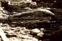 Abrégé sur tronc d'arbre de décomposition images libres de droits