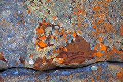 Abrégés sur lichen Photos stock
