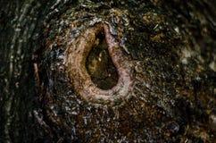 abrégez le fond Écorce de texture d'arbre Photo stock
