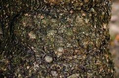 abrégez le fond Écorce de texture d'arbre Images libres de droits
