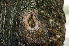 abrégez le fond Écorce de texture d'arbre Photos libres de droits