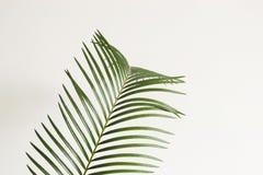 abrégez le fond Branche de paume sur le fond blanc Fragment intérieur scandinave photos stock