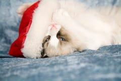 Abraçando um chapéu de Santa fotos de stock