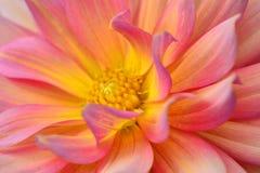 Abraço cor-de-rosa imagem de stock royalty free