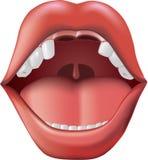 Abra a boca com dentes faltantes. Ilustração do Vetor