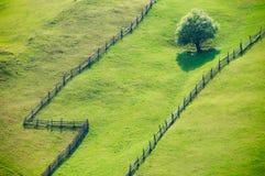 Abra campos de grama Fotos de Stock Royalty Free