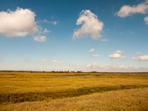 Abra a cena da paisagem da região pantanosa com céus azuis, nuvens, e gras Fotografia de Stock Royalty Free
