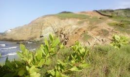 Abra el campo cubierto con las flores donde usted puede ver el mar Fotografía de archivo libre de regalías