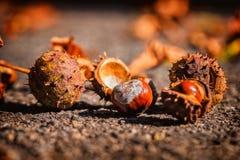 Abra el castaño de Indias en la tierra en otoño en la tierra fotografía de archivo