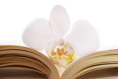 Abra el libro con una orquídea Imagen de archivo libre de regalías