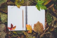 Abra el libro en blanco en las hojas secas en otoño Lectura, nostálgico, Edu Imagen de archivo