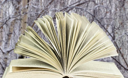 Abra el libro en el fondo de los abedules Foto de archivo libre de regalías