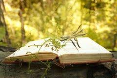 Abra el libro en fondo de madera con efecto mágico del bokeh de la planta del misterio en el fondo imagen de archivo
