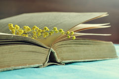 Abra el libro gastado con la pequeña rama de la mimosa bajo luz caliente - todavía de la primavera vida filtrada en tonos retros Fotografía de archivo libre de regalías