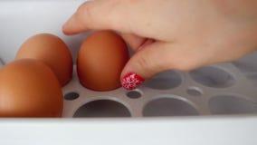 Abra el refrigerador llenado y ponga los huevos del pollo en un estante almacen de video
